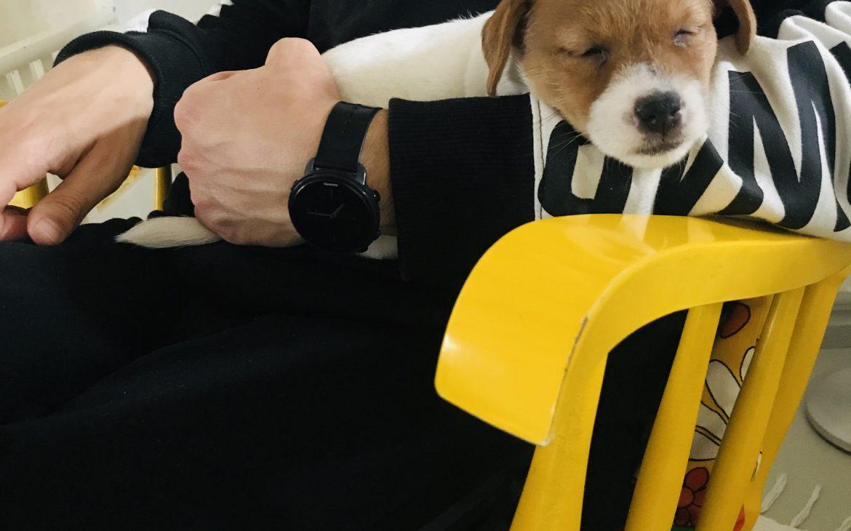 Elluyellow koiranpentu keltaisessa keinutuolissa