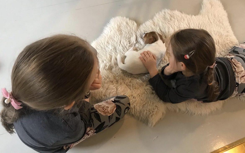 Elluyellow tyttäret ja Tilda koira